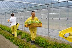 自立農園作業の様子|岸和田採光学園|光生会