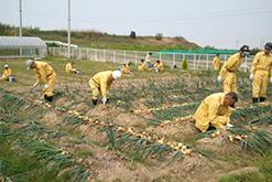 作物の収穫の様子|岸和田採光学園|光生会